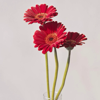 用花做眼影的步骤图片