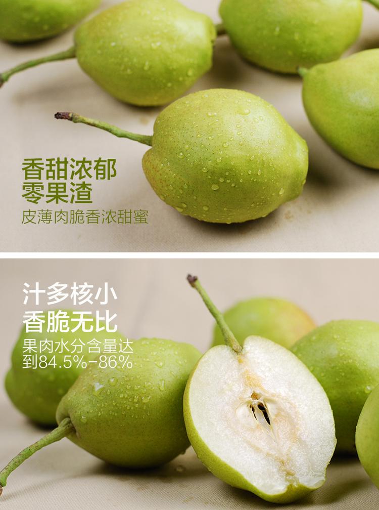 【杞农优食】山西运城红香酥梨新鲜上市 库尔勒香梨 单果130g-230g  5斤装包邮新品