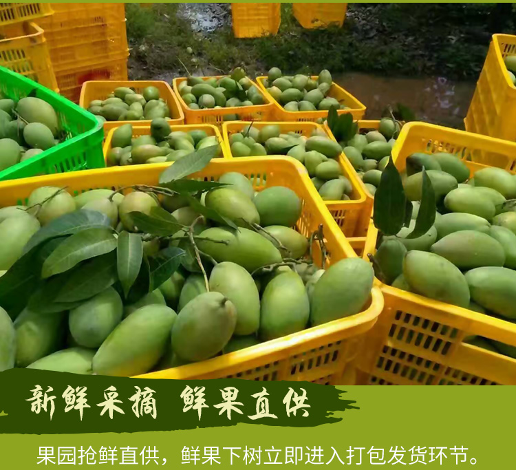 【杞农优食】越南玉芒新鲜水果 单果200-300g 5斤装 清甜核小进口芒果价格